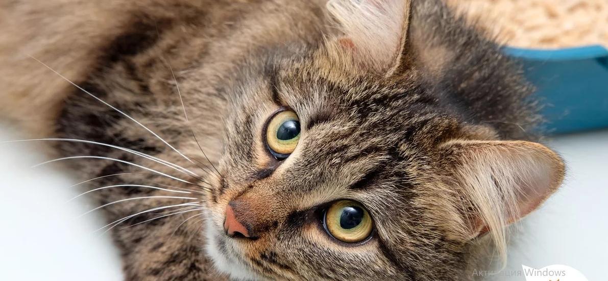 4 поступка, которые кошка вам не простит - никогда не делайте этого при ней