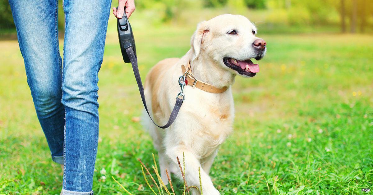 Как гулять с собакой при карантине