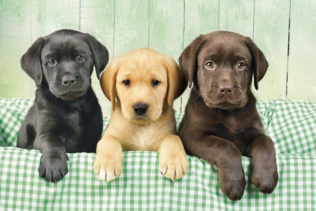 Маленькие собаки для квартиры